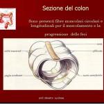 sezione-colon